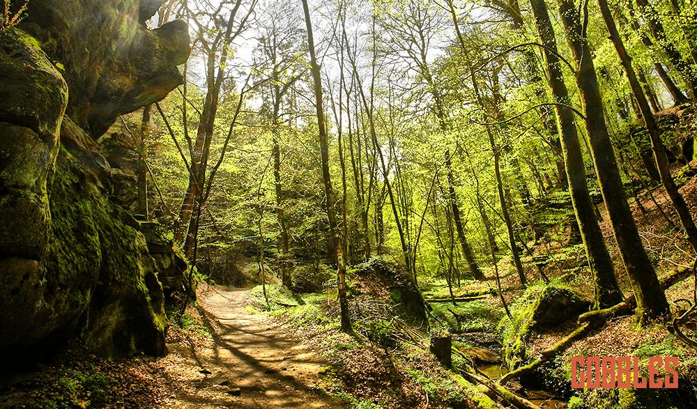 Gijs Frencken mountainbikemarathon Mill Mann Trail