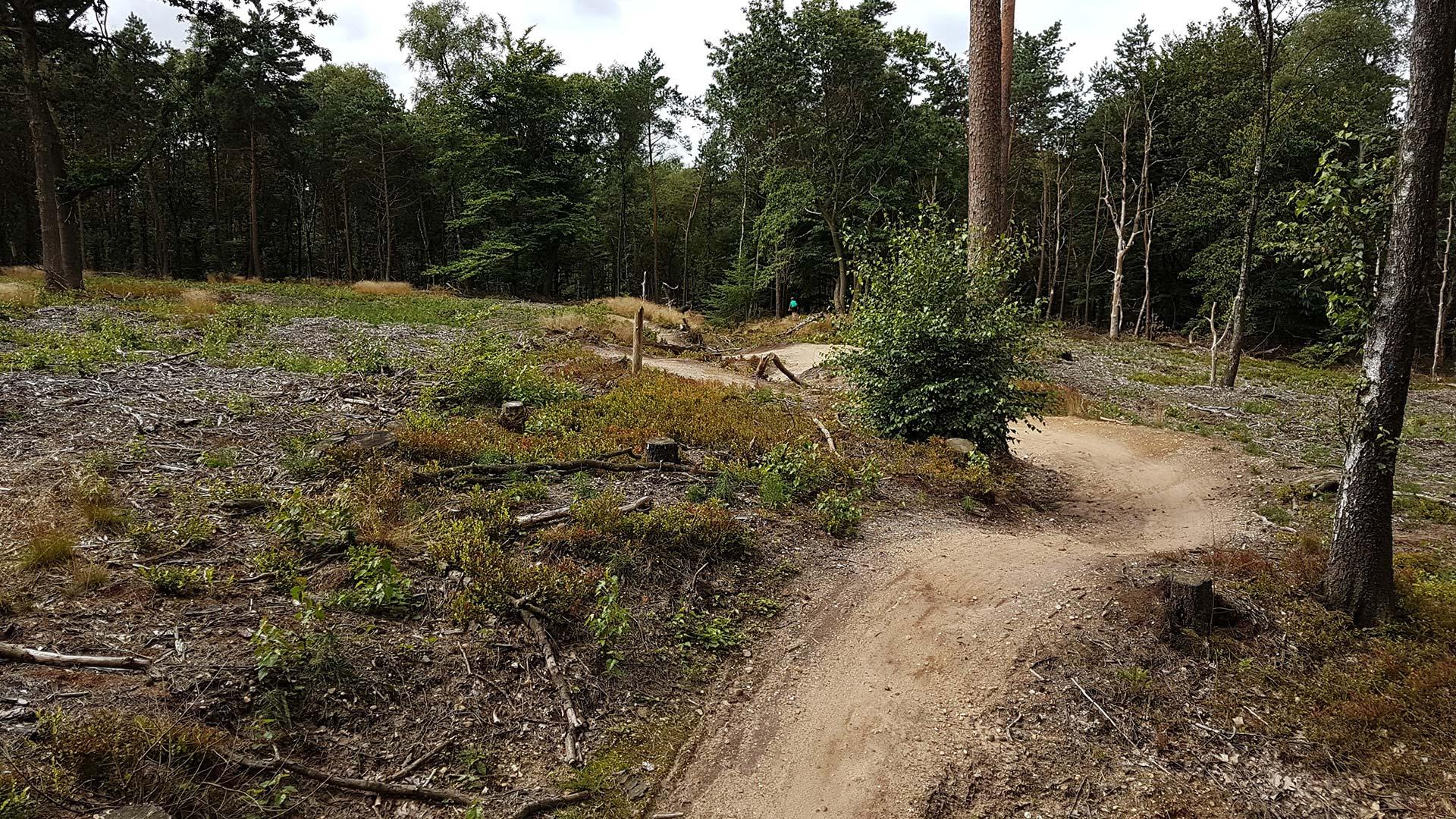 Utrechtse Heuvelrug: alle mountainbikeroutes op één dag