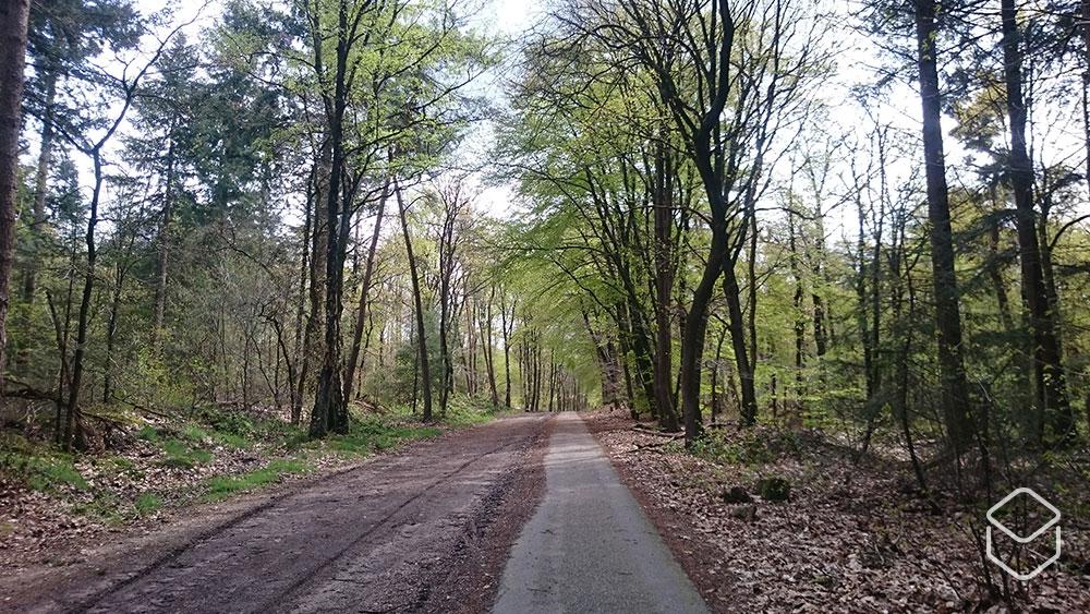 cobbles wielrennen routes nijmegen bossen
