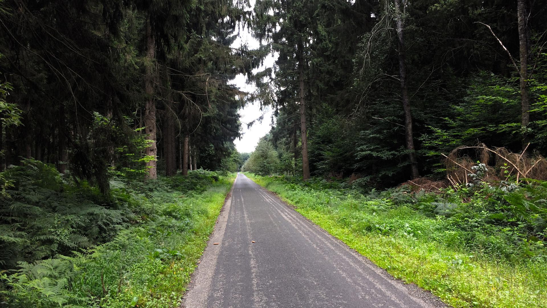 De mooiste routes voor wielrenners rondom Nijmegen
