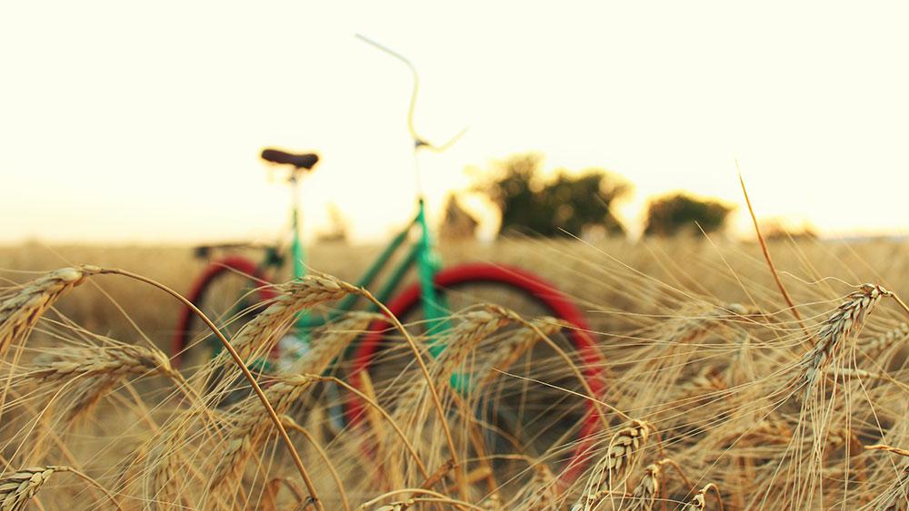 cobbles-wierennen-voeding-glutenintolerantie-graanveld-fiets