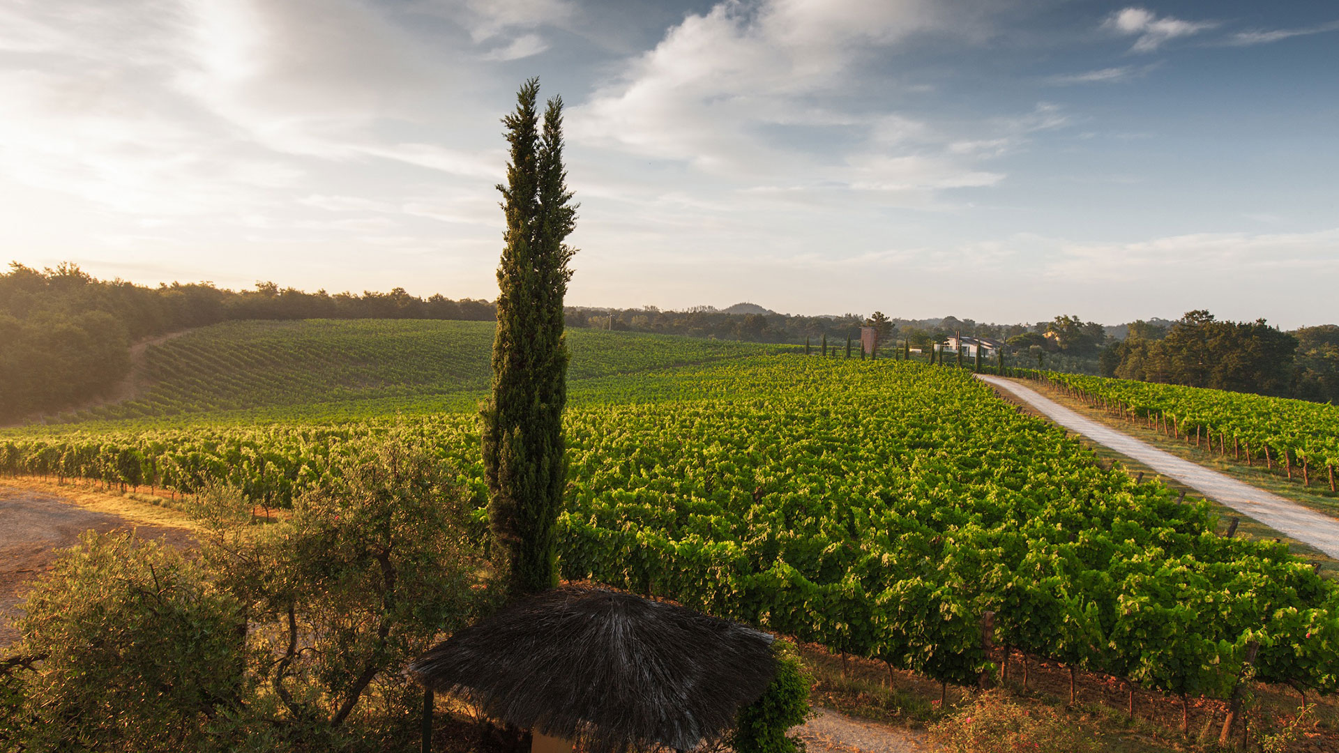 Wielrennen in Toscane: fijne routes in de Chianti-streek
