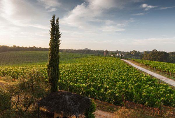 cobbles-wielrennen-in-toscane-routes-chianti-uitgelicht