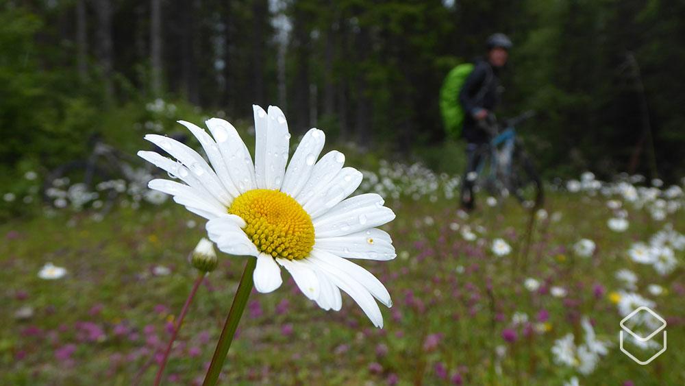 cobbles-mountainbiken-bikepacking-scandinavie-stolavspad-bloem