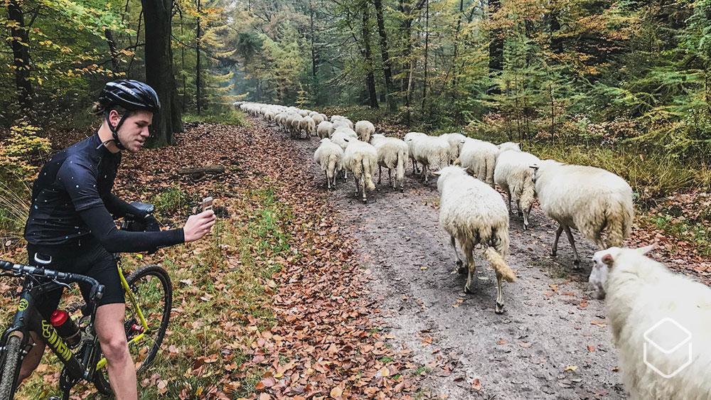 cobbles-wielrennen-gravellen-beginners-schapen