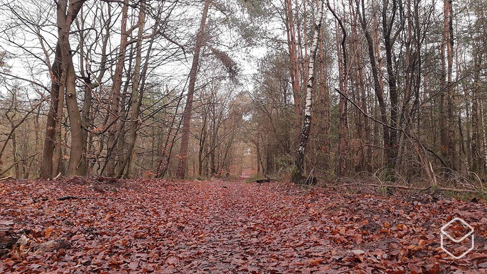 cobbles-wielrennen-gravelroutes-gelderland-zuid-veluwe-herfst