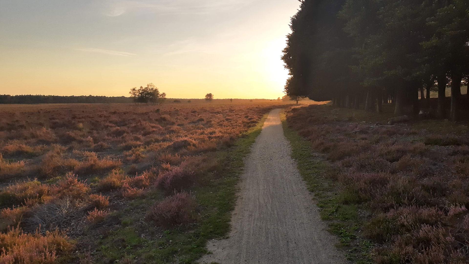 4 Gravelroutes op de Veluwe: er is meer dan de Posbank