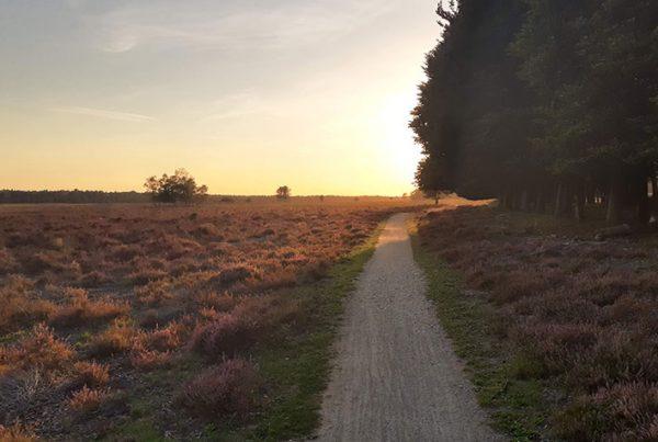 cobbles-wielrennen-gravelroutes-gelderland-zuid-veluwe-uitgelicht